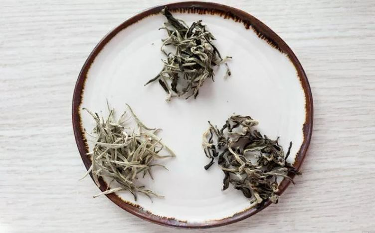 white tea caffeine